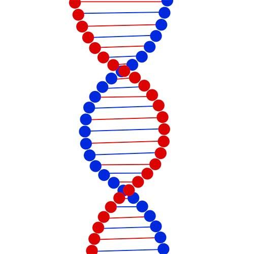 遺伝子細胞